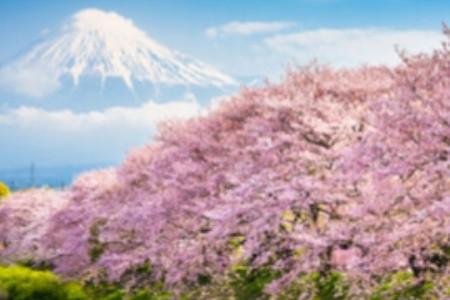 Hanami: když v Japonsku kvetou sakury