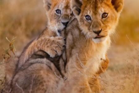 Na safari do Afriky