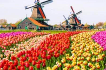 Hollandia varázslatos tulipánmezői