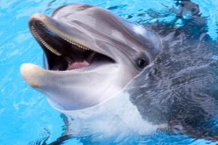 Delfinárium Varna v Bulharsku