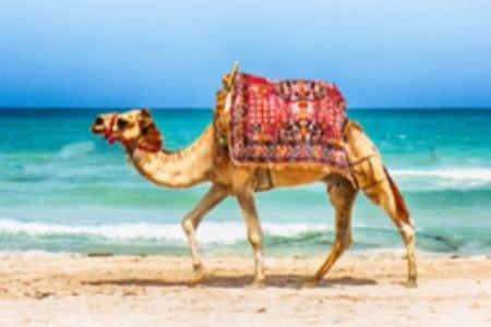 Tunézia legszebb strandjai