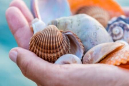 TOP pláže pre milovníkov mušlí