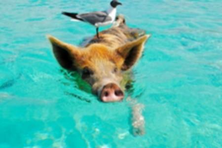 Egzotikus nyaralásra fel!