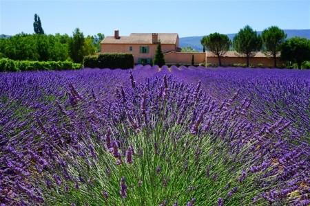 Provence plná překvapení - květinové korzo