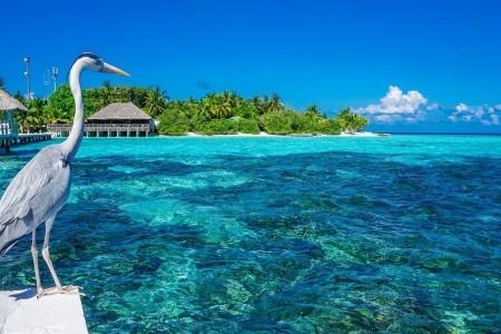 Maledivy na jaře - nejlepší recenze