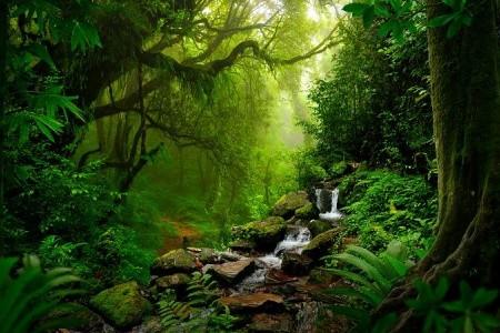 To Nejlepší Z Brazílie + Amazonský Prales + Snídaně First Minute