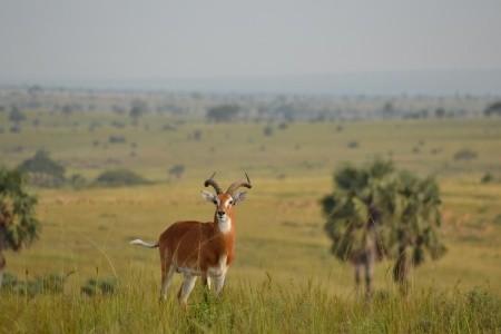 Okruh Ugandou a horské gorily