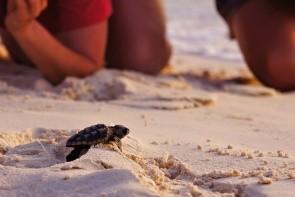 Pozorování želv