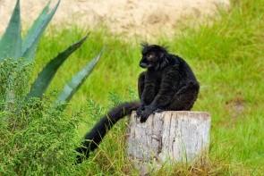 Zvierací park Friguia