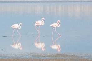 Solné jezero Larnaca