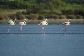 Solné jezero Alykés