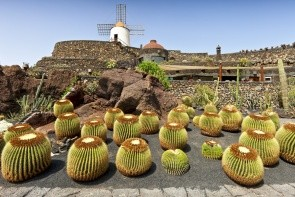 Kaktusová záhrada