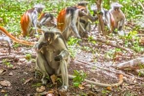 Prírodná rezervácia Kiwengwa-Pongwe