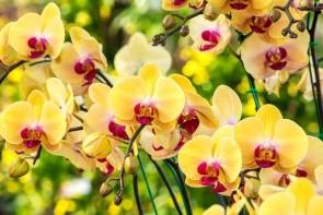 Školka orchidejí