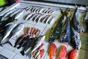 Rybí trh v Malé