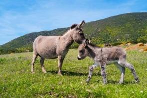 Národní park Asinara