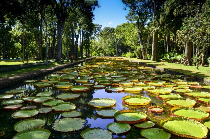 Botanická záhrada Pamplemousses