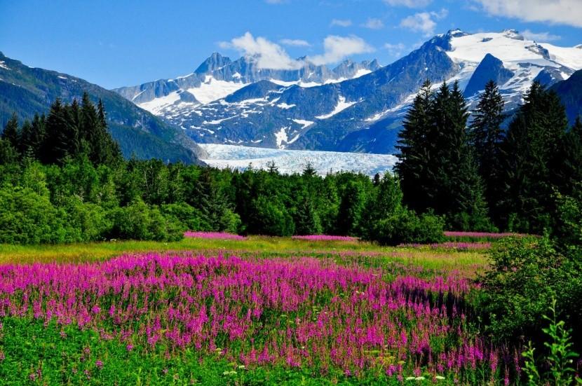 Kvetoucí Aljaška