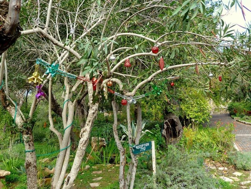 V Indii si na Vianoce ozdobia akýkoľvek strom