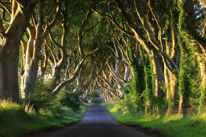 Dark Hedges Írország fák erdő
