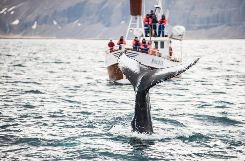 bálnanéző túra hajó tenger turisták