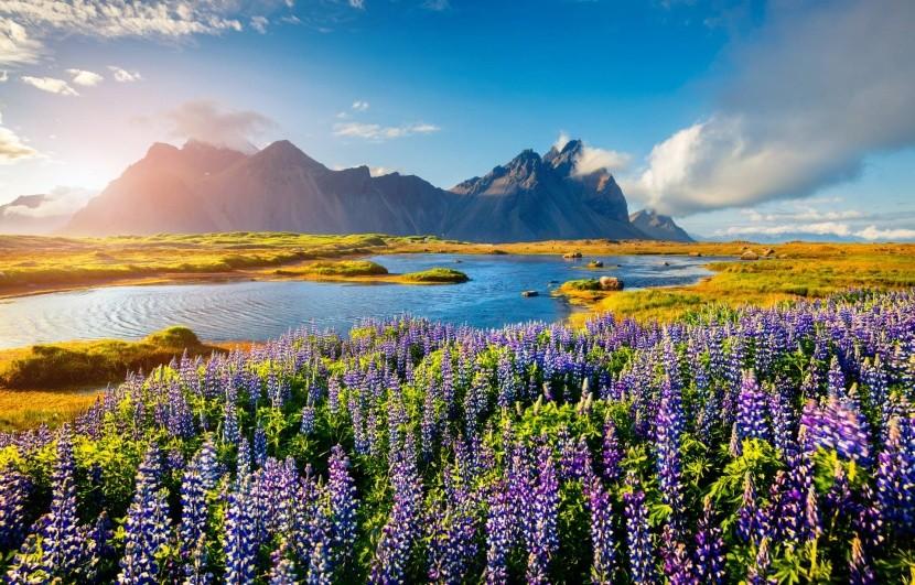 Izland természet virágok vízpart vulkán