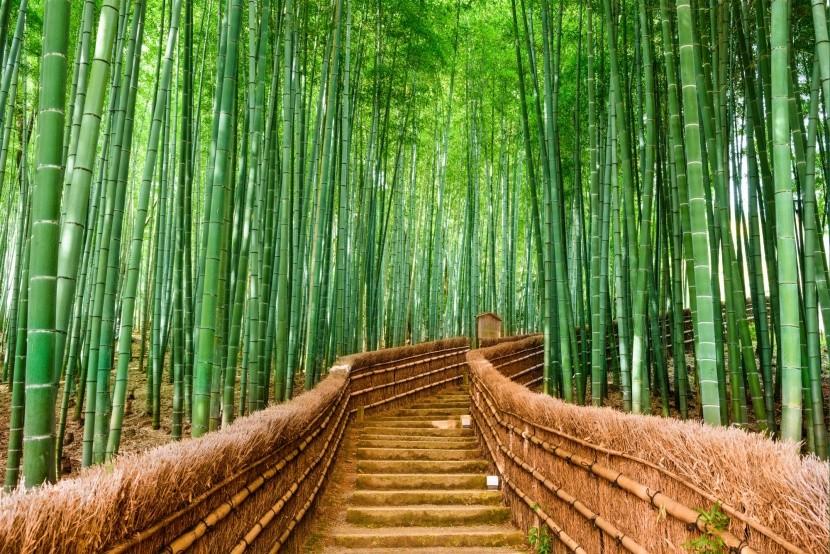 Bambusový les Sagano, Japonsko