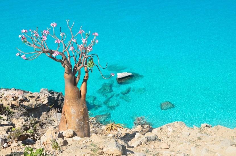 Ostrov Sokotra, Jemen