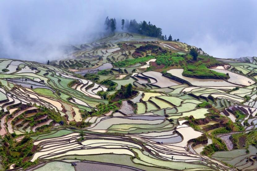 Rýžové terasy v provincii Yunnan, Čína
