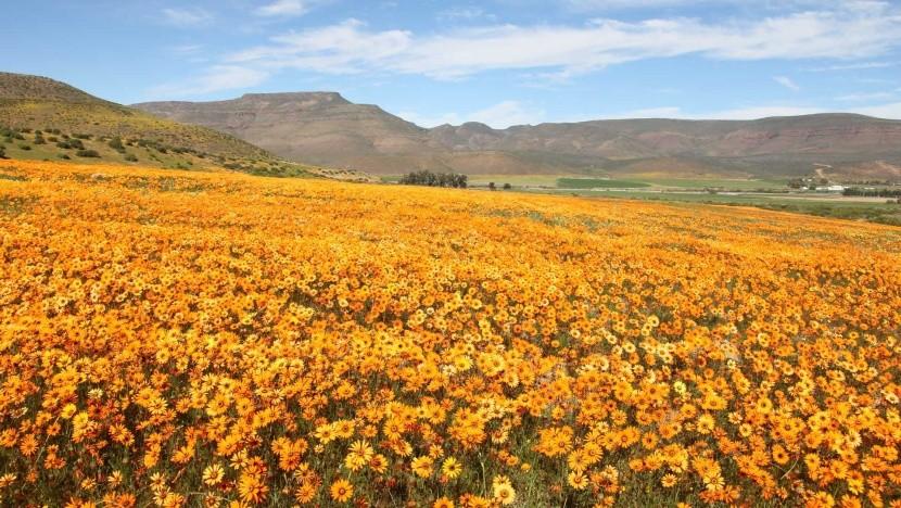 Namaqualand, Juhoafrická republika