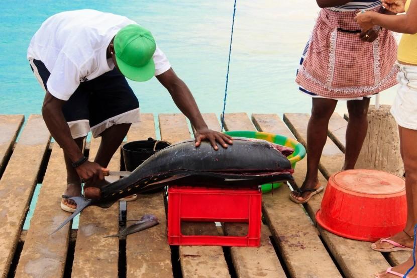 Zpracování i prodej ryb probíhá přímo na mole