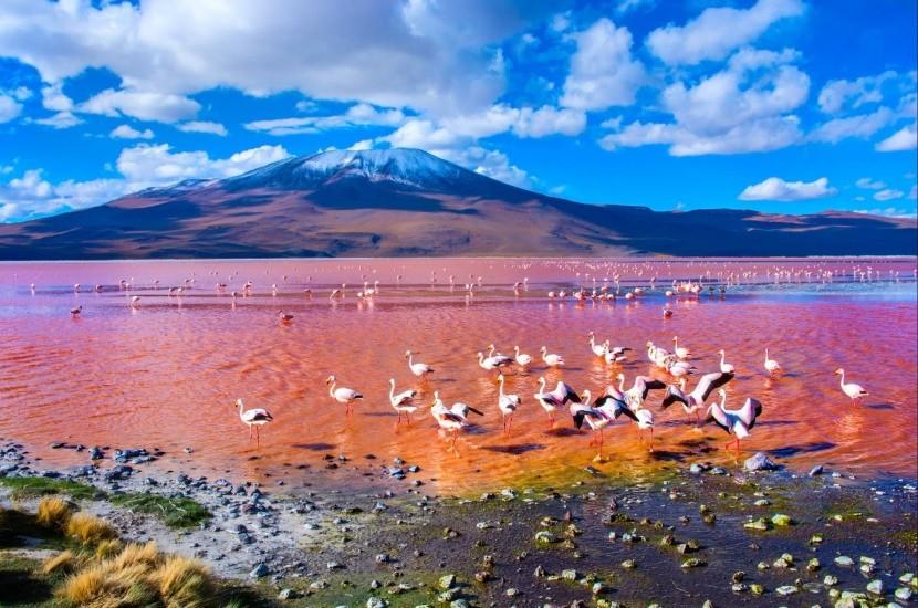 Laguna Colorada, Bolívie