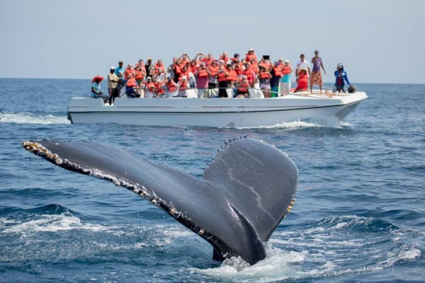 Pozorovanie veľrýb v Dominikánskej republike