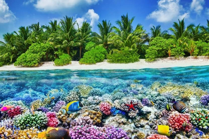 Thoddoo szigete
