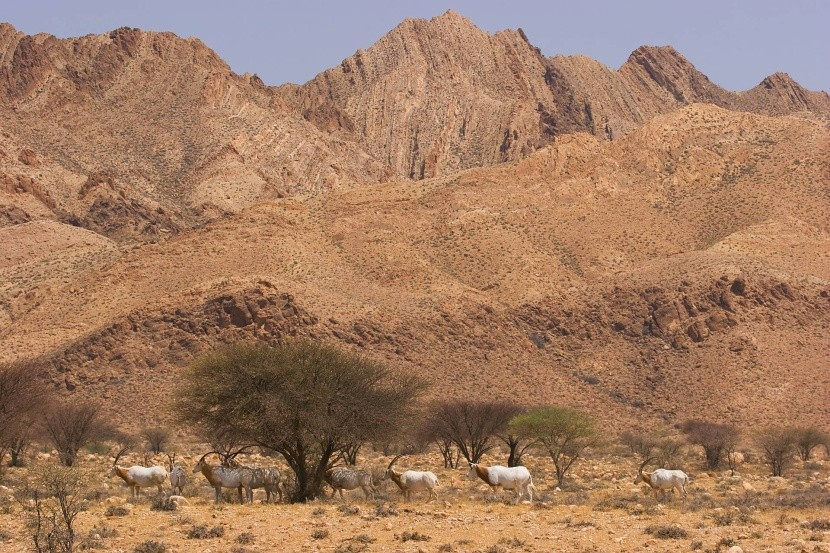 Antilopok a Bou Hedma Nemzeti Parkban