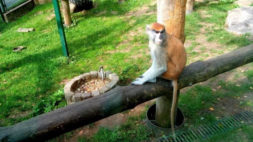 Zoo Gdaňsk