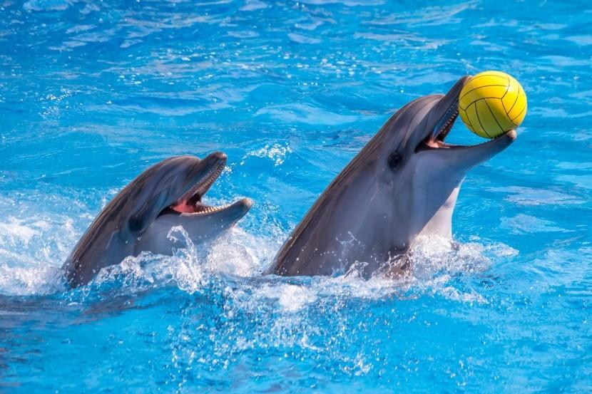Delfinárium v Hurghadě