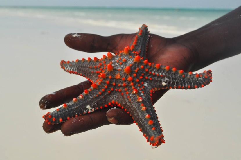 Pláž Kiwengwa, Zanzibar
