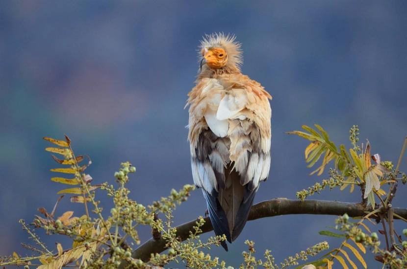 Úžasná fauna Sokotry