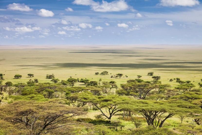 Végtelen síkság a Serengetiben