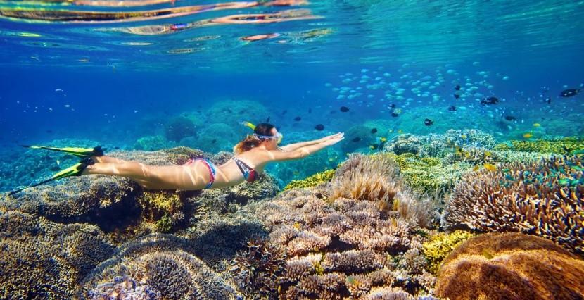 Korallok között úszni nagy élmény