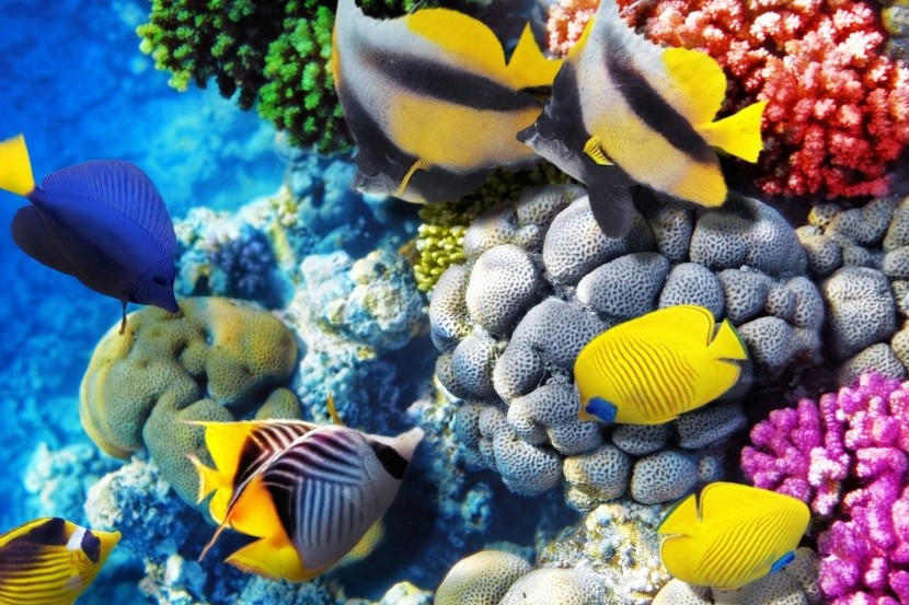 Élet a Vörös-tengerben