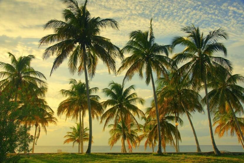 Kuba tengerpartja