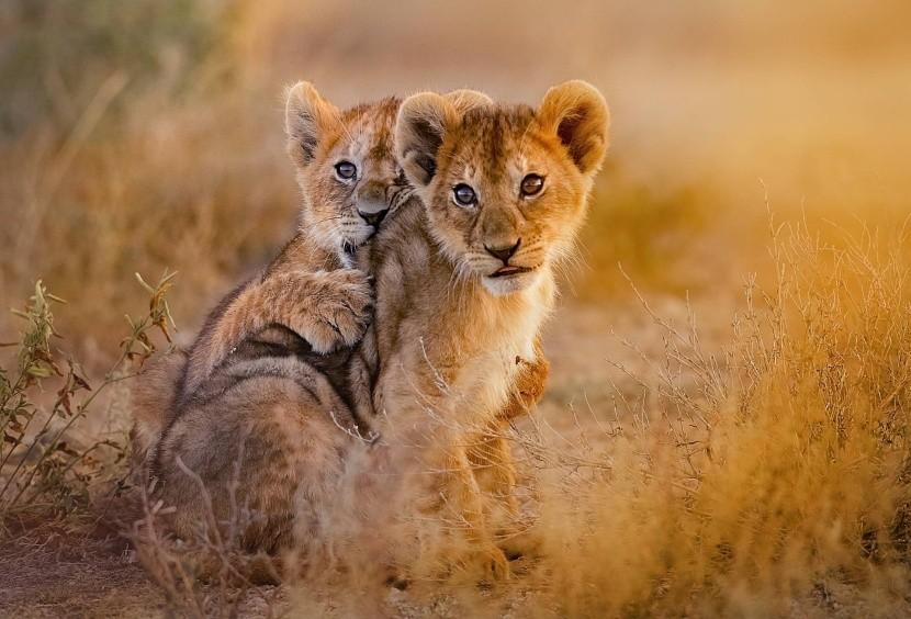 Levíčatá vo voľnej prírode