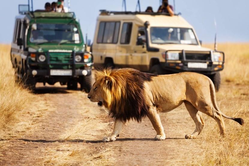 Nasadnite do džípu a hurá na safari!