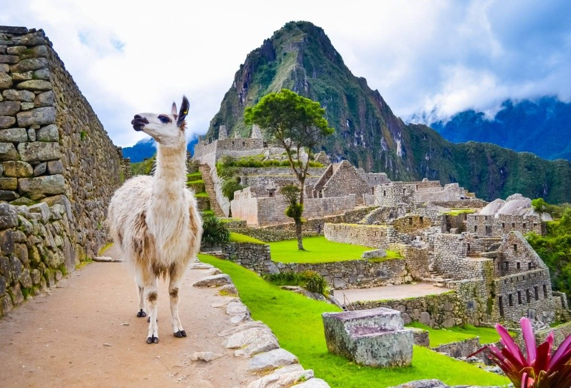Láma Machu Picchuban