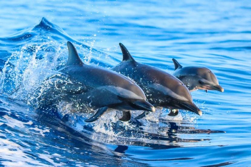 Delfíní centrum na ostrově Moorea