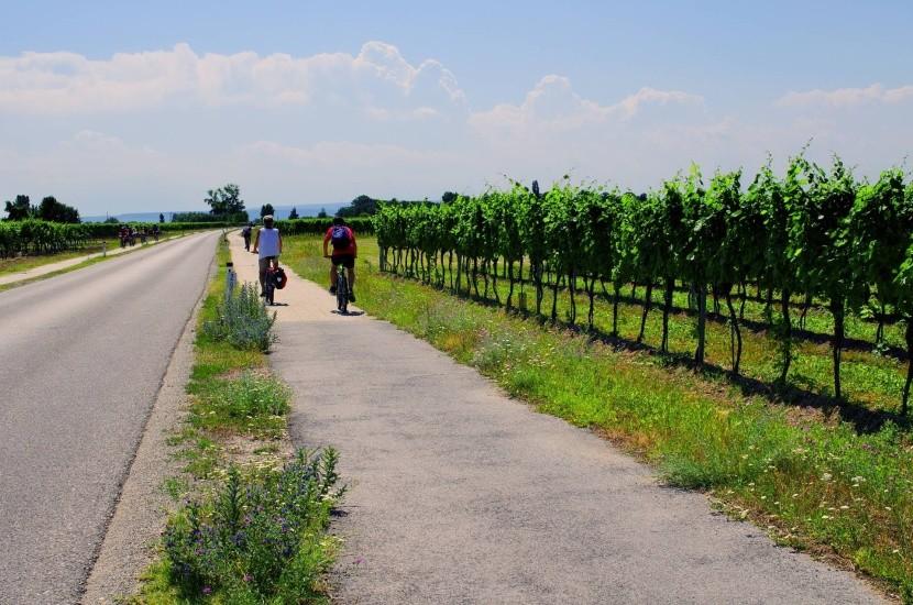 Bicikliút Neusiedlersee körül