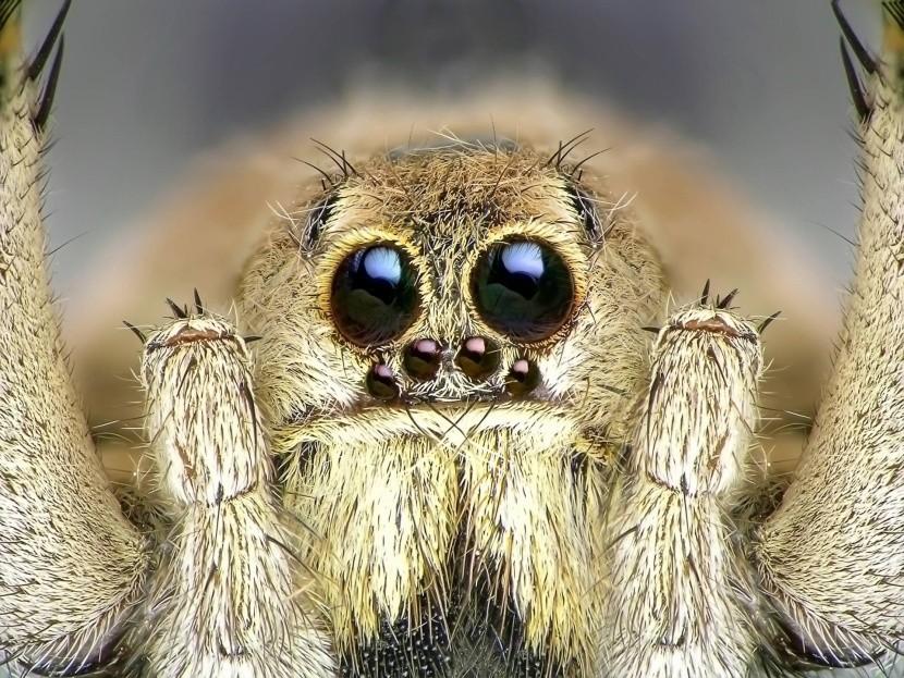 Nič pre arachnofobikov