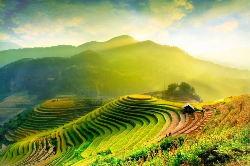 Rýžové terasy ve Vietnamu
